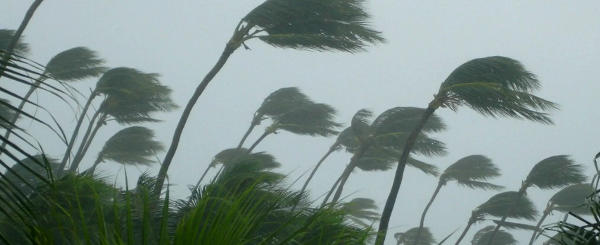 picture of trees in a huricane