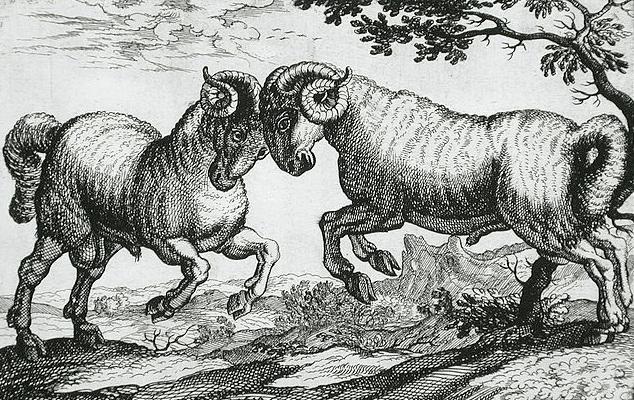 2 béliers se battent, gravure Hollandaise de 1610, domaine public